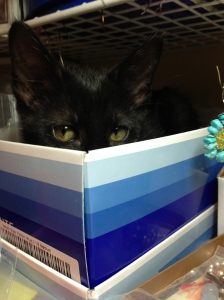 May 29th 2013 Mama Gato sitting in my odds and end boxes on my jewelry design table.