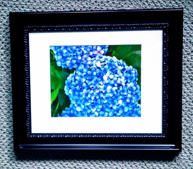 Hydrangeas, Photography, 14.5x17.5 $70